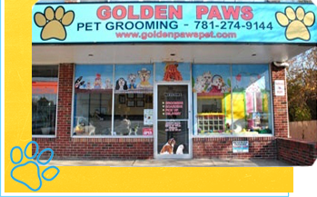 about-golden-paws