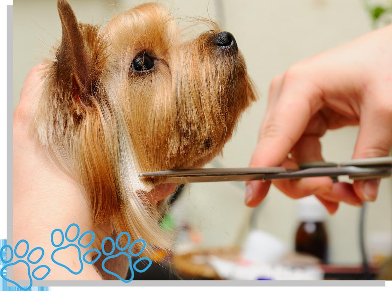 servicedoggie-grooming